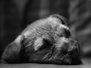 barking misophonia
