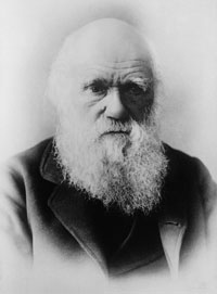 Darwin Misophonia